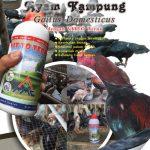 Modul Budidaya Ayam Kampung